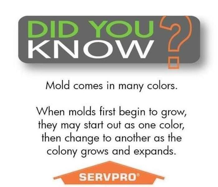Mold Remediation Tens Things You Should Know About MOLD