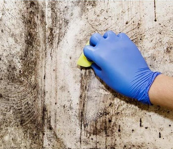 Mold Remediation Does Bleach Kill Mold?
